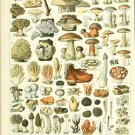 "Different Types of Mushrooms Champignons Adolphe Millot 18""x28"" (45cm/70cm) Canvas Print"