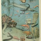 """Sea and Ocean Creatures Mollusques Chart Adolphe Millot 13""""x19"""" (32cm/49cm) Polyester Fabric Poster"""