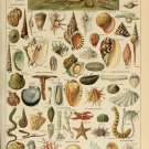 "Sea and Ocean Creatures Mollusques Chart Adolphe Millot 18""x28"" (45cm/70cm) Canvas Print"