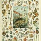 """Sea and Ocean Creatures Mollusques Chart Adolphe Millot 18""""x28"""" (45cm/70cm) Canvas Print"""