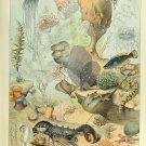 "Sea and Ocean Creatures Mollusques Chart Adolphe Millot  18""x28"" (45cm/70cm) Poster"