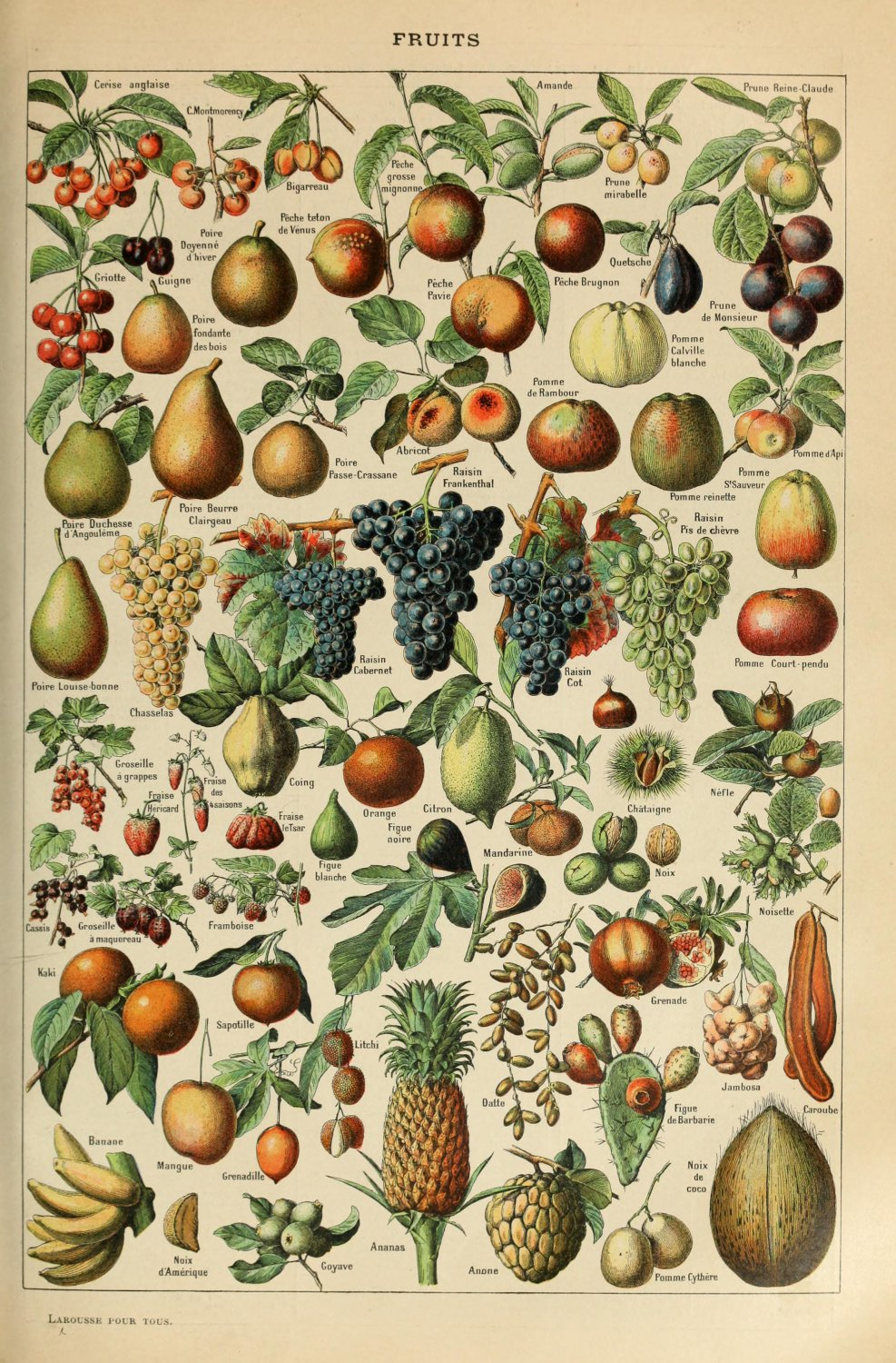 "Different Types of Fruits Adolphe Millot 18""x28"" (45cm/70cm) Poster"