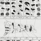 """Beef Cuts Where they come from How to cook them Chart  18""""x28"""" (45cm/70cm) Canvas Print"""