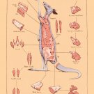 """Cuts of Kangaroo Meat Chart 13""""x19"""" (32cm/49cm) Polyester Fabric Poster"""