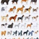 "Popular Dog Breeds Chart 18""x28"" (45cm/70cm) Poster"