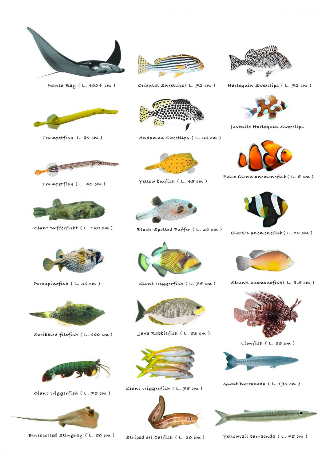 "Types of Little Fish Chart 13""x19"" (32cm/49cm) Polyester Fabric Poster"