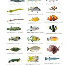 """Types of Little Fish Chart 13""""x19"""" (32cm/49cm) Polyester Fabric Poster"""
