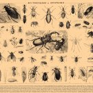 """Brockhaus and Efron Encyclopedic Dictionary Chart 18""""x28"""" (45cm/70cm) Poster"""