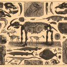 """Brockhaus and Efron Encyclopedic Dictionary Chart 13""""x19"""" (32cm/49cm) Polyester Fabric Poster"""