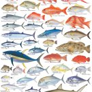 "Fishes of Australia Important Tropical Species Chart 18""x28"" (45cm/70cm) Canvas Print"