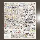 """Birds of North America Chart 18""""x51"""" (45cm/130cm) Bundle of 2 Posters"""