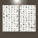 """Different Types of Dinosaurs Chart 18""""x28"""" (45cm/70cm) Bundle of 2 Canvas"""