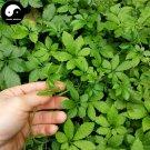 Buy Real Gynostemma Herb Seeds 200pcs Plant Herbal Gynostemma For Jiaogulan Tea