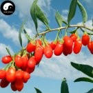 Buy Real Goji Berries Tree Seeds 100pcs Plant A Wolfberry Tree For Goji Berries