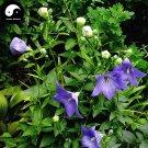 Buy Platycodon Grandiflorus Seeds 200pcs Plant Bellflower For Herb Jie Geng