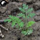 Buy Real Peru Maca Seeds 200pcs Plant Lepidium Meyenii Walp For Peruvian Ginseng