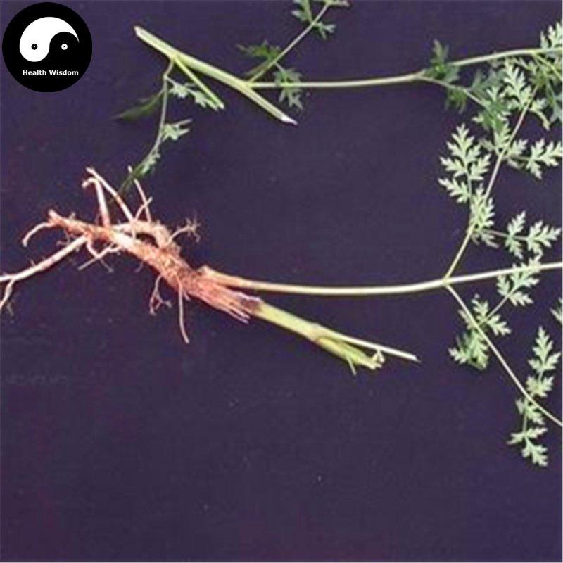 Buy Divaricate Saposhnikovia Seeds 100pcs Plant Saposhnikoviae For Bei Fang Feng