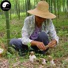Dried Phallus Indusiatus 500g Chinese Stinkhorn Fungus Bamboo Fungus Mushroom