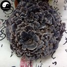 Dried Coriolus Versicolor Mushroom 200g Real Chinese Trametes Versicolor Yun Zhi