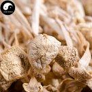 Dried Enokitake Mushroom 500g Real Chinese Flammulina Velutipes Jin Zhen Gu