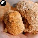 Dried Hericium Erinaceus 500g Chinese Lion's Mane Mushroom Yamabushitake