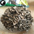 Maitake Mushroom 100g Chinese Grifola Frondosa For Immune Dancing Mushroom