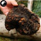 Inonotus Obliquus 500g Chinese Chaga Mushroom For Immune Wild Bai Hua Rong