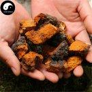 Inonotus Obliquus 200g Chinese Chaga Mushroom For Immune Wild Bai Hua Rong