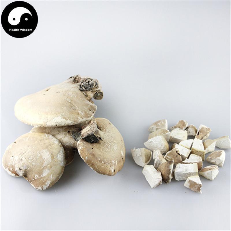 Piptoporus Betulinus 100g Chinese Birch Bracket Mushroom White Lingzhi Kanbatake