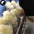 Cauliflower Mushroom 500g Chinese Sparassis Crispa For Immune Hanabiratake
