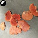 Trametes Cinnabarina 50g Chinese Medicinal Mushroom Hong Shuan Jun