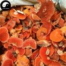 Trametes Cinnabarina 250g Chinese Medicinal Mushroom Hong Shuan Jun