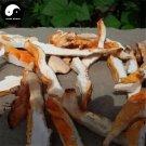 Laetiporus Sulphureus 50g Chinese Medicinal Mushroom Liu Huang Jun