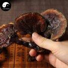 Reishi Mushroom 500g Chinese Wild Lingzhi Ganoderma Lucidum Chi Zhi