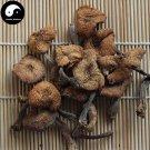 Hazel Dell Mushroom 200g Chinese Hazel Mushroom Dried Zhen Mo