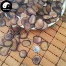 Sika Deer Antler Slice 50g Chinese Energy Tonic Lu Rong Xue Pian