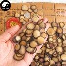 Sika Deer Antler Slice 20g Chinese Energy Tonic Lu Rong Bai Fen Pian