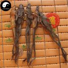 Northeast Rana Chensinensis 4pcs Chinese Dried Snow Clams Xue Ha Frogs