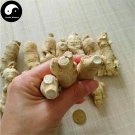 American Ginseng Roots 50g Panax Quinquefolius Roots Hua Qi Shen