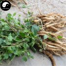 Buy Codonopsis Seeds 200pcs Plant Chinese Tang Shen For Herb Dang Shen
