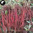 Buy Salvia Miltiorrhiza Seeds 100pcs Plant Chinese Herb Danshen For Dan Shen