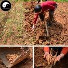Buy Radix Adenophorae Seeds 400pcs Plant Upright Ladybell Grow Herb Nan Sha Shen