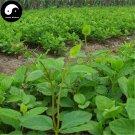Buy Radix Adenophorae Seeds 100pcs Plant Upright Ladybell Grow Herb Nan Sha Shen