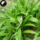 Buy Herb Bletilla Striata Seeds 200pcs Plant Orchid Bletilla For Bai Ji