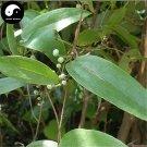 Buy Herb Poria Cocos Seeds 60pcs Plant Poria Cocos For Fu Ling