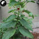 Buy Herb Scrophularia Seeds 120pcs Plant Chinese Figwort Root For Xuan Shen
