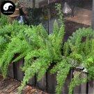 Buy Asparagus Seeds 120pcs Plant Asparagus Cochinchinensis For Tian Men Dong
