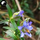 Buy Gentiana Scabra Seeds 400pcs Plant Elephantopus Scaber For Long Dan Cao