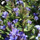 Buy Gentiana Scabra Seeds 100pcs Plant Elephantopus Scaber For Long Dan Cao