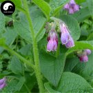 Buy RADIX ARNEBIAE Seeds 120pcs Plant LITHOSPERMI For Purple Grass Zi Cao